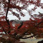 紅葉の紅葉谷をお散歩・山口県の岩国市横山