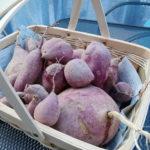 ワクワクする野菜の収穫・秋