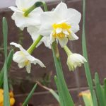 春はもうすぐですね・庭の花や木