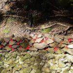 城山登山と豊作のシイタケ