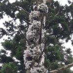 令和2度目の弥山登山・木の上のセッコク